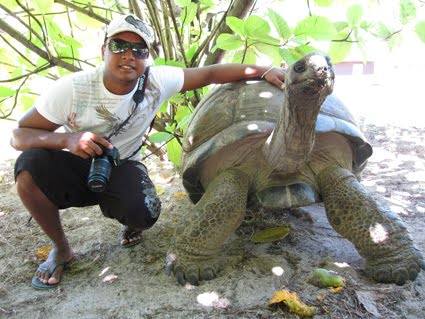 Image result for Seychelles turtles