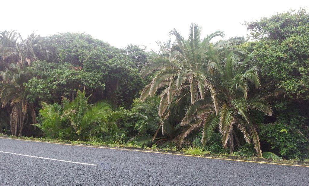 Durban_Roadside