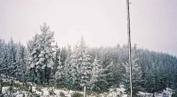 Snow%20Trees
