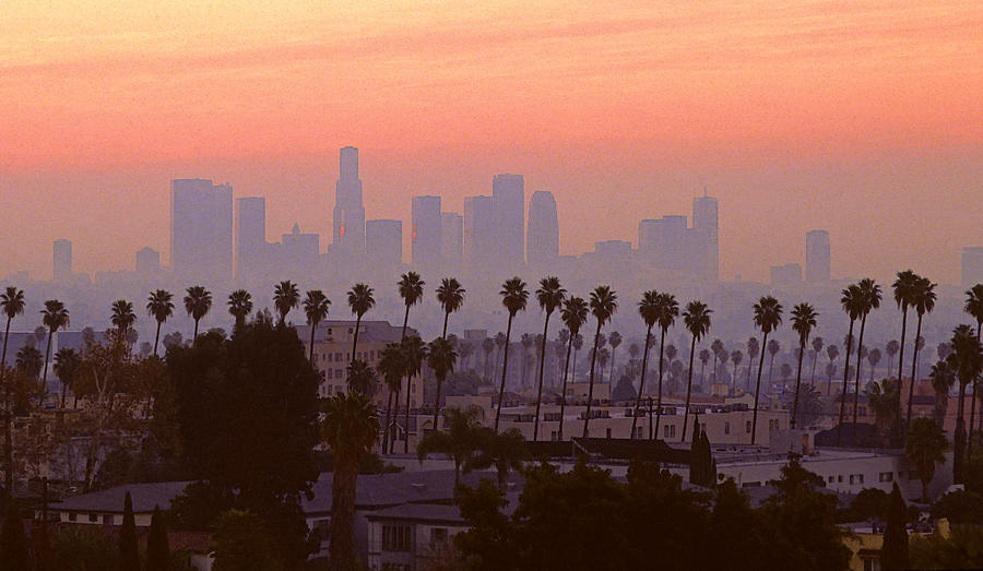 los-angeles-skyline-and-palm-trees-rene-sheret