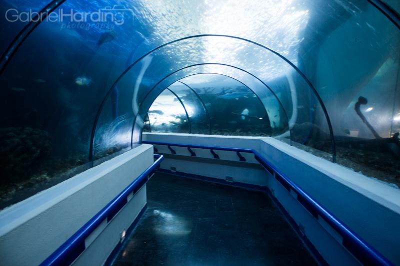 National-Aquarium-Santo-Domingo-Dominican-Republic-5