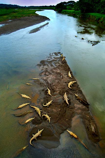 crocodile-rio-tarcoles-costa-rica