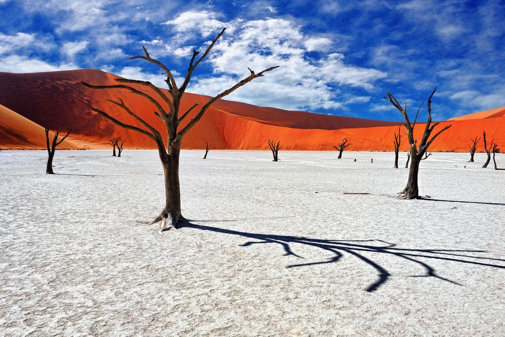 deadvlei-forest.jpg.1000x0_q80_crop-smart