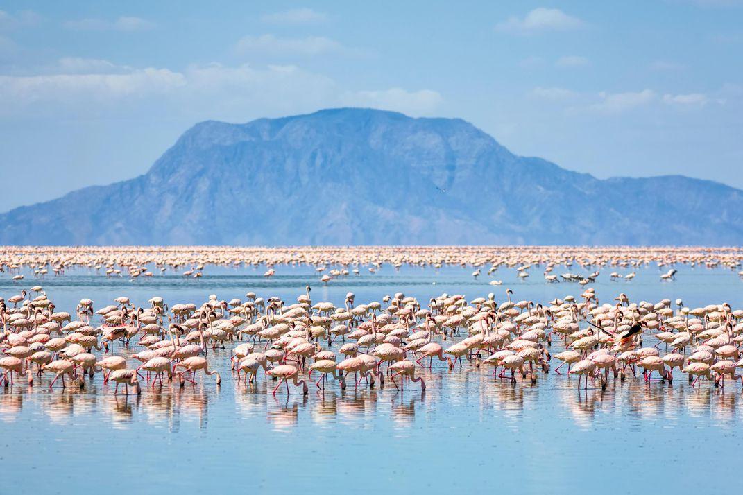 lake-natron-flamingos-mountain
