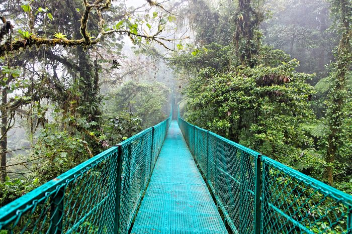 monteverde_cloud_forest_biological_reserve_costa_rica.jpg