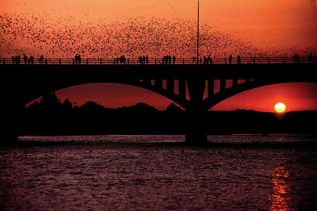 congress_bridge_bats