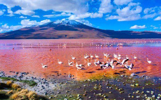 Laguna-Colorada-,-Uyuni-iStock-478415328